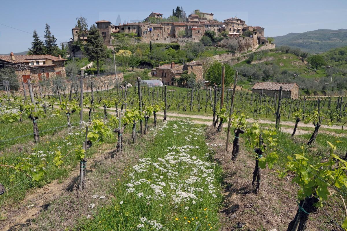 Greve in Chianti has two major celebrations     Show market of plants